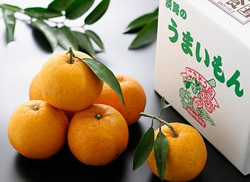 なるとオレンジ