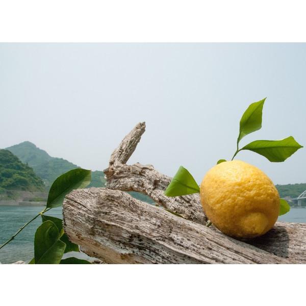 天照 レモン通販