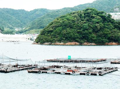 ミネラル豊富な天然の魚場で管理を行っております。