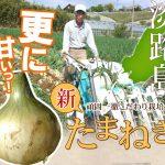 淡路島今井ファームの玉ねぎを通販で買うなら絶対ココ!